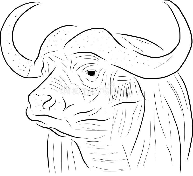 De buffels schetsen uit de vrije hand stock foto's