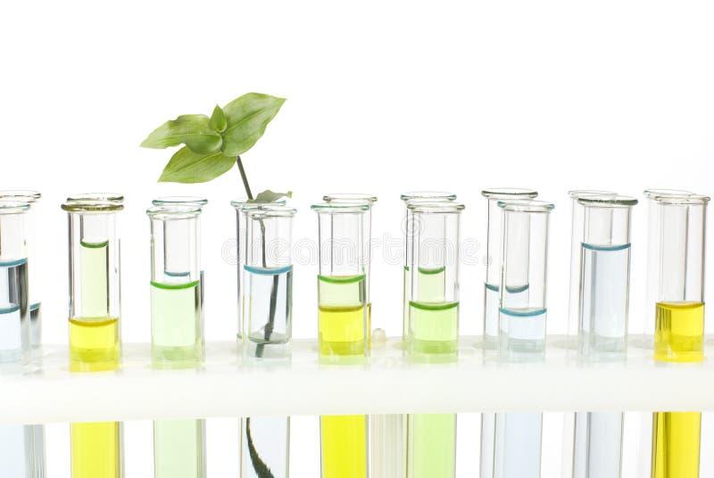 De buizen van het glas met gekleurde oplossingen royalty-vrije stock afbeelding