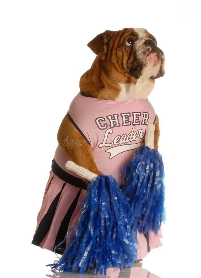 De buldog kleedde zich als cheerleader royalty-vrije stock fotografie