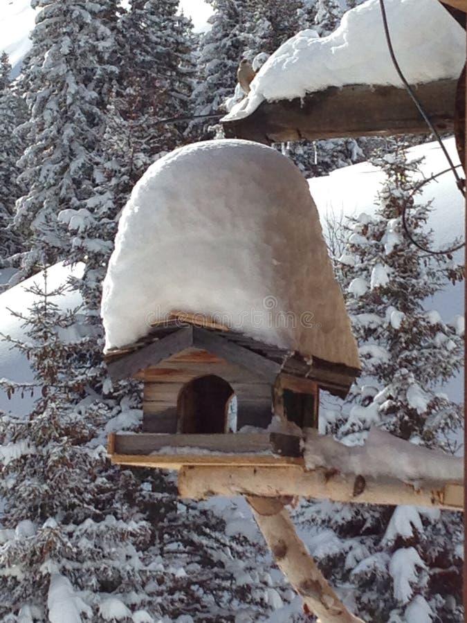 De cabine van de aardvogel royalty-vrije stock afbeeldingen