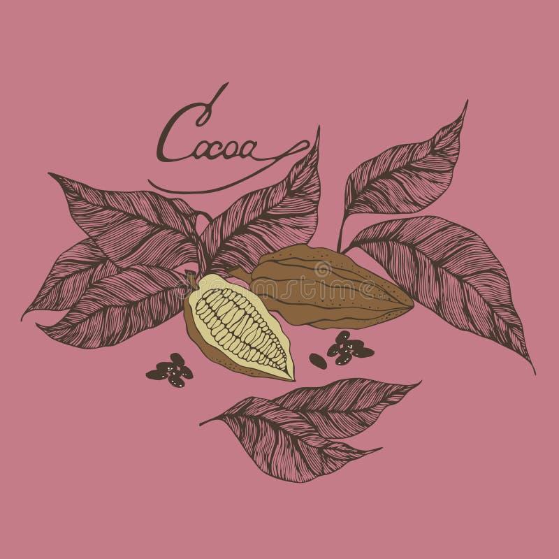 De cacaobonen en doorbladert illustratie met het van letters voorzien royalty-vrije illustratie