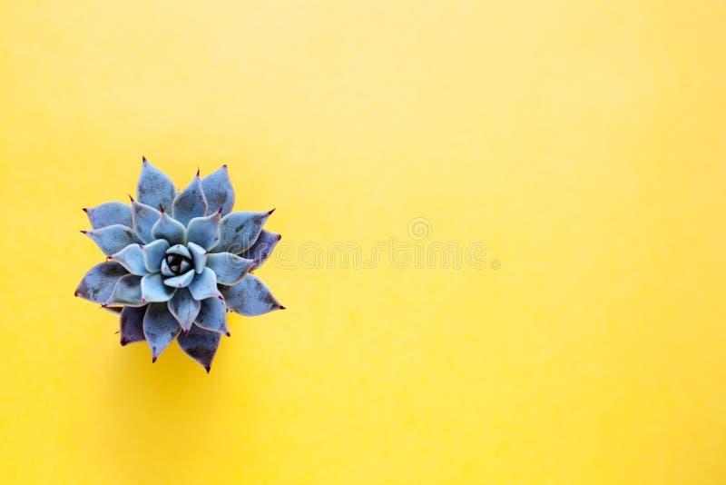 De cactus is een succulente installatie op een gele achtergrond stock afbeeldingen