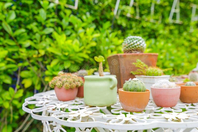 De cactus en installatiepotteninzameling op de lijst in de koffie winkelt stock foto's