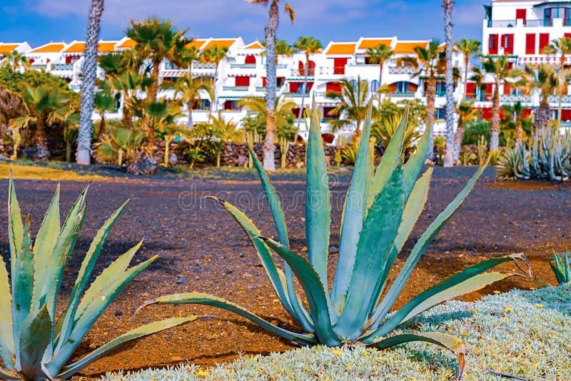 De cactus van de close-upagave, vat natuurlijke achtergrond en textuur, in de achtergrondpalmen samen stock foto