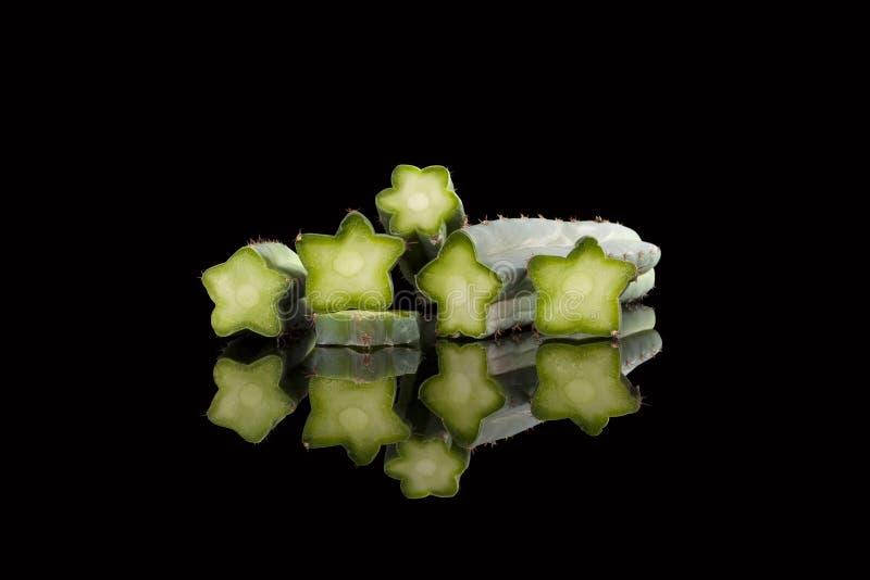 De cactus van San Pedro royalty-vrije stock foto
