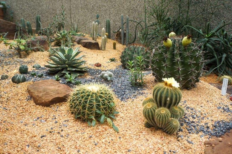 De Cactussen en Succulents in het dessert tuinieren royalty-vrije stock foto's
