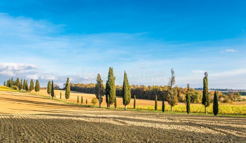 De campagne van Lucignano royalty-vrije stock fotografie