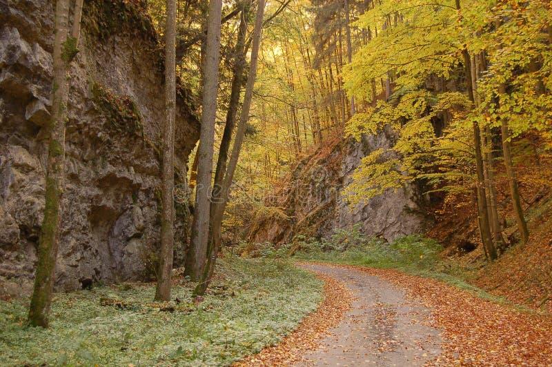 De canion van de herfst stock afbeeldingen