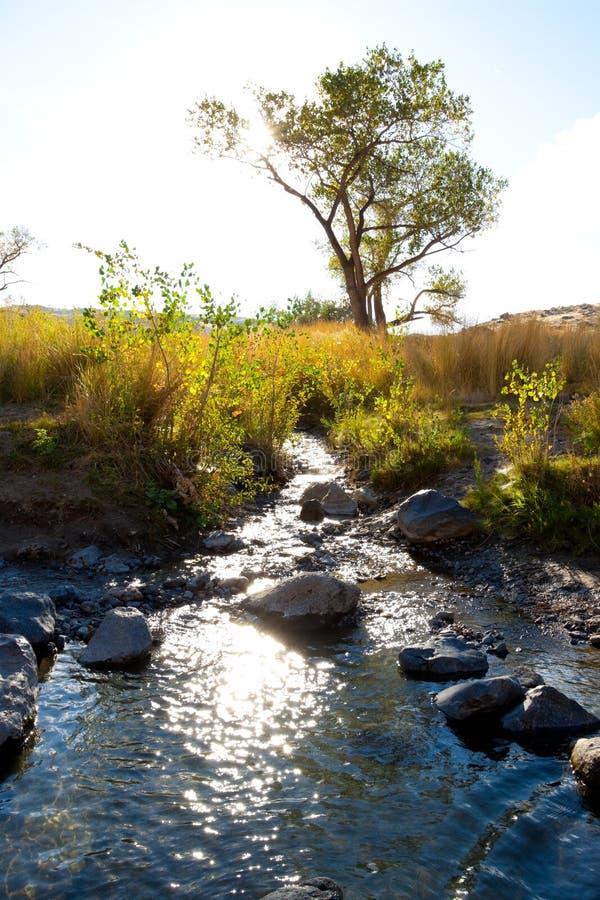 De Canion van de Rivier van Owyhee stock foto