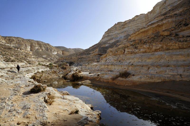 De Canion van de woestijn in de lente. royalty-vrije stock foto