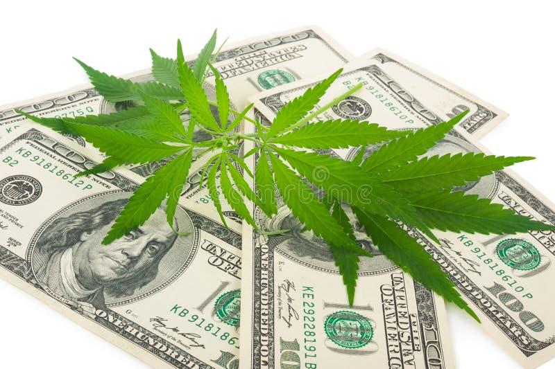 De cannabis en het geld royalty-vrije stock afbeeldingen