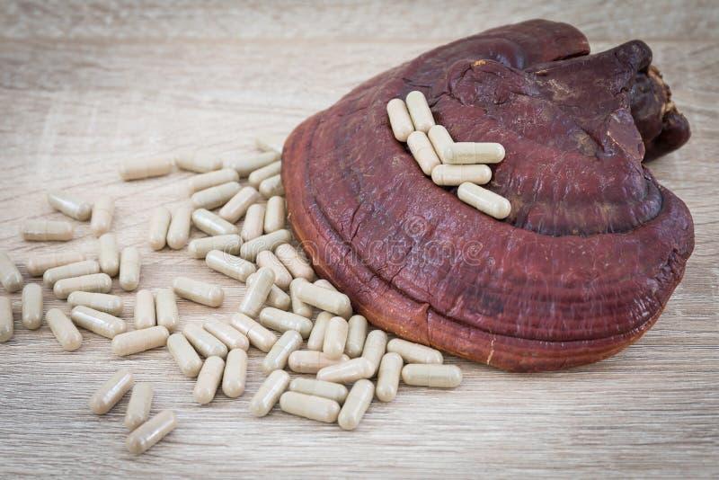 De capsule van Ganodermalucidum - Ling-zhipaddestoel stock afbeeldingen