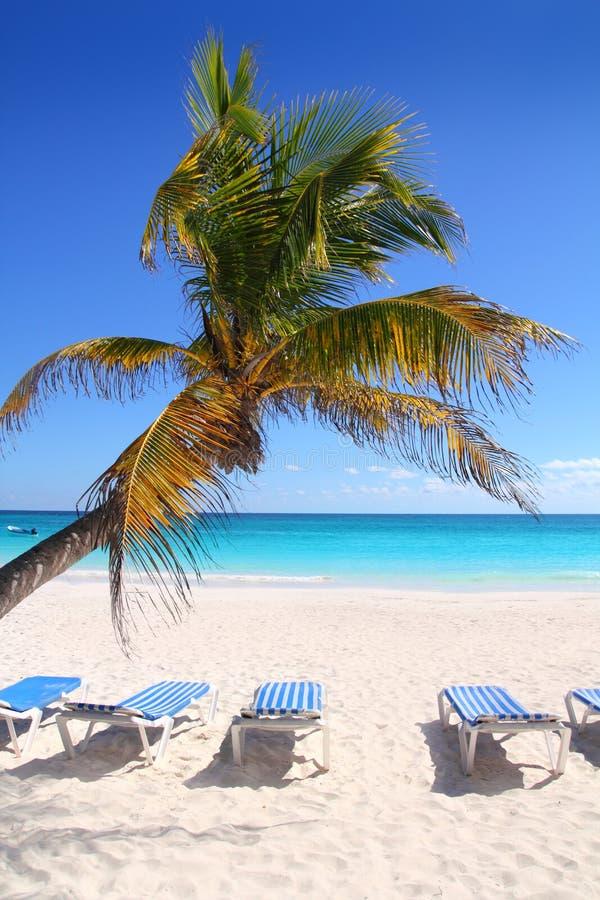 De Caraïbische kokosnotenpalmen tuquoise binnen overzees stock foto
