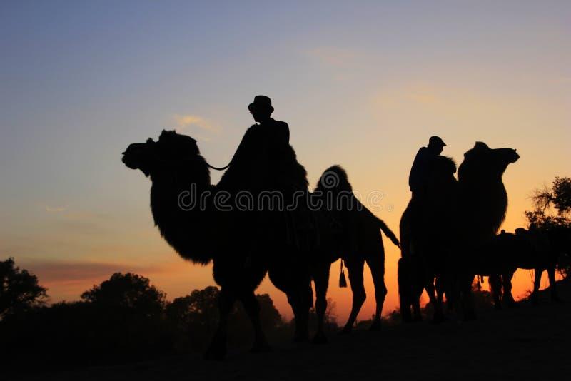 De caravan van de kameel royalty-vrije stock afbeelding