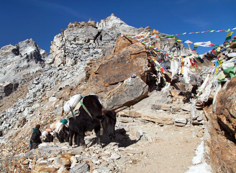 De caravan van yaks in Renjo-dichtbijgelegen de Pas van La zet Everest op stock foto