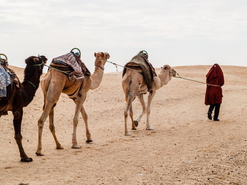 De caravan in de woestijn van de Sahara bij zonsondergang verwijdert zich aan de horizon royalty-vrije stock foto
