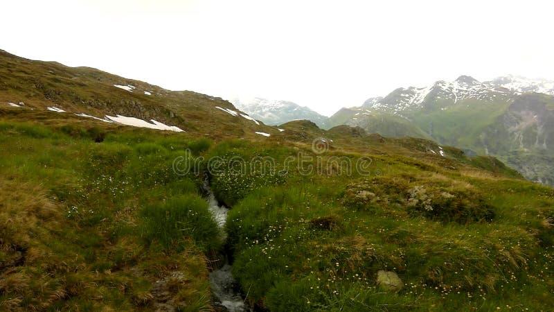 De cascade op kleine bergstroom in Alpen, water loopt over stenen in groene weide stock footage