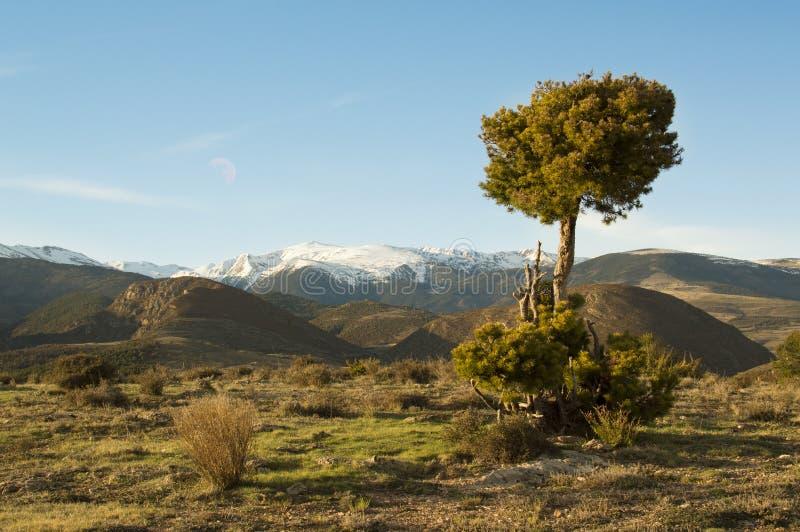 De Catalaanse Pyreneeën, Girona, Catalonië, Spanje royalty-vrije stock afbeelding