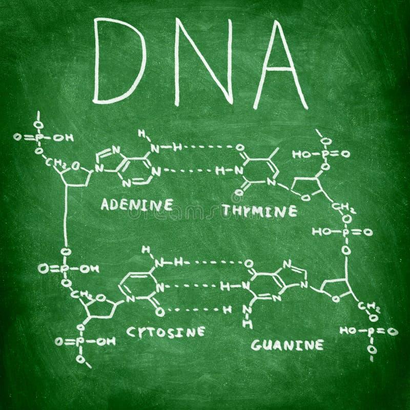 De chemiestructuur van DNA op bord stock afbeeldingen