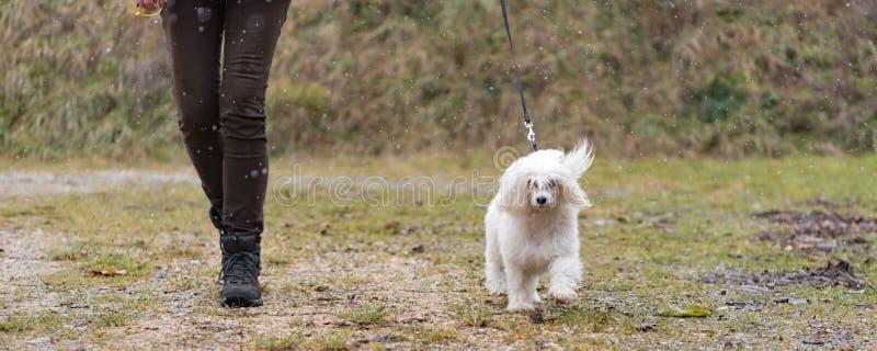 De Chinese Kuifmanager die van de de Rookwolkhond van het Hondpoeder met hond in sneeuwval in de winter lopen royalty-vrije stock fotografie