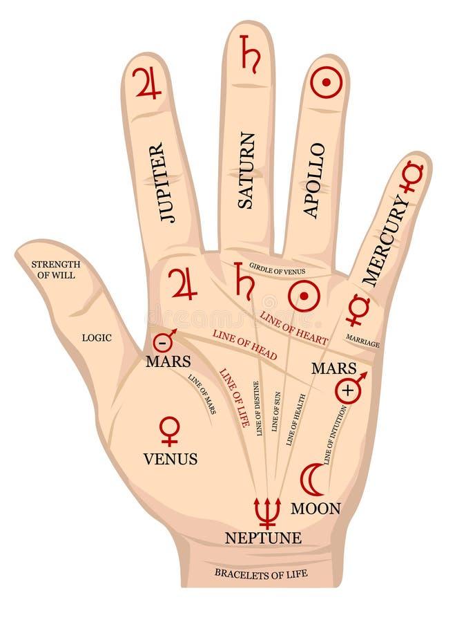 De chirologie van de palm. vector illustratie