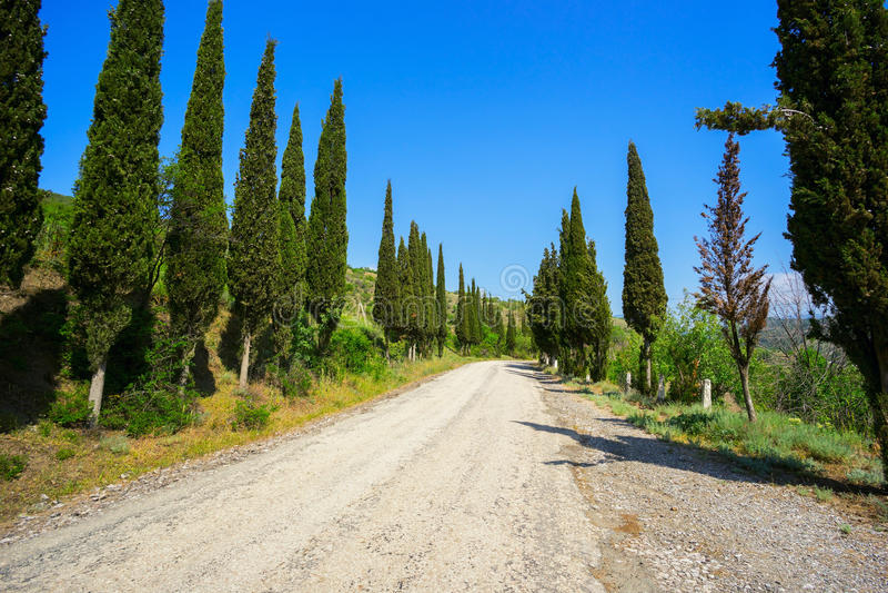 De cipresbomen groeien langs de weg stock afbeelding