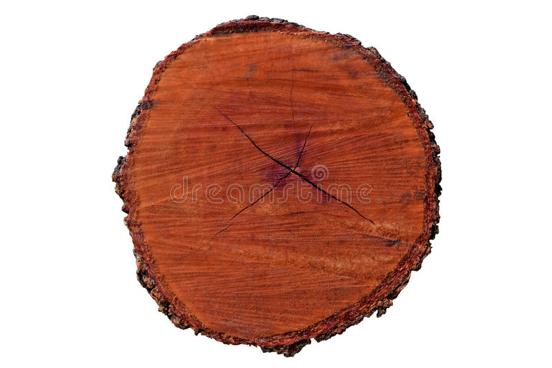 De cirkelhout van de boom jaarring (Matrijzenknipsel) stock foto's