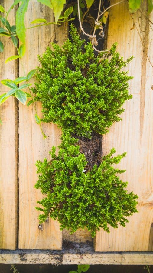 De close-up stemde beeld van bloemen, gras en bushesh het groeien in kleine potten op decoratieve verticale houten muur bij de bo stock foto