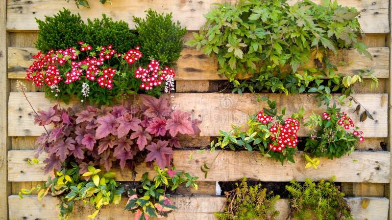 De close-up stemde beeld van bloemen, gras en bushesh het groeien in kleine potten op decoratieve verticale houten muur bij de bo royalty-vrije stock afbeeldingen
