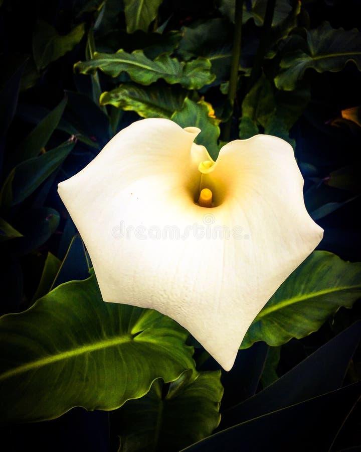 De close-up van de bloem royalty-vrije stock fotografie