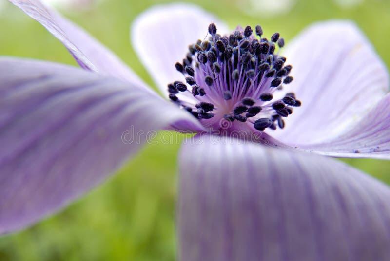 De close-up van de bloem stock afbeeldingen