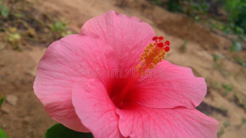 De close-up van de bloem stock fotografie