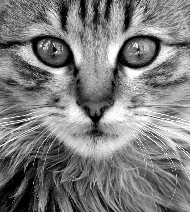 De close-up van de kat royalty-vrije stock afbeeldingen