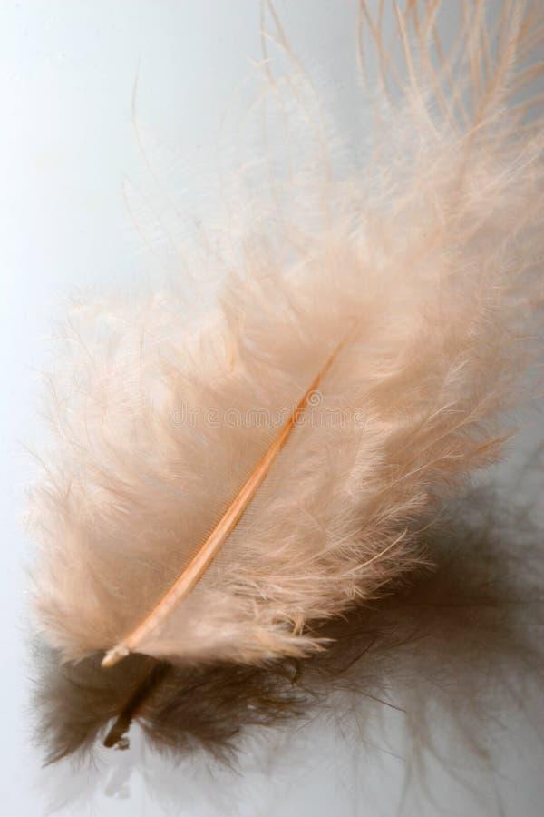De close-up van de veer stock afbeelding