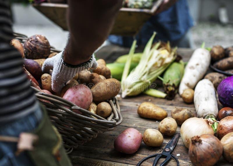 De close-up van hand schikt aardappels op houten lijst royalty-vrije stock afbeeldingen
