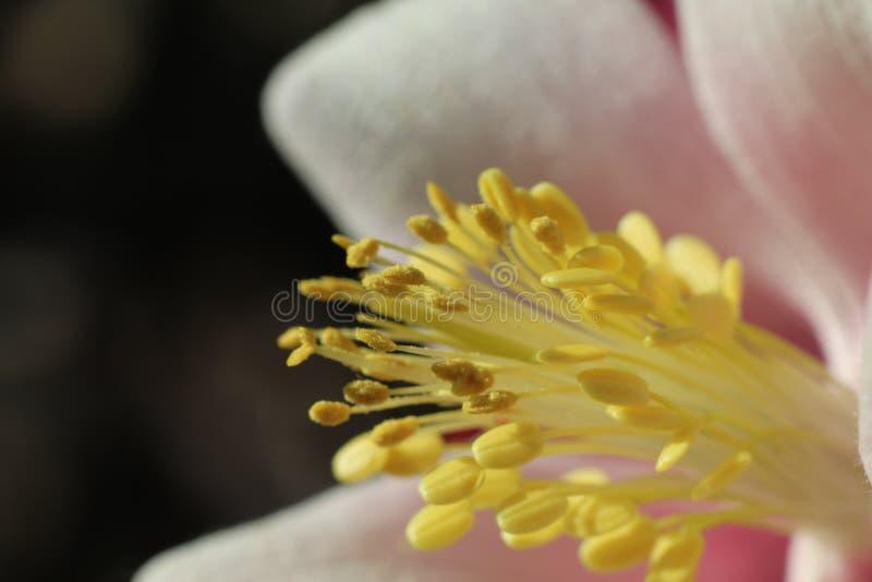De Close-up van het bloemcentrum royalty-vrije stock afbeeldingen