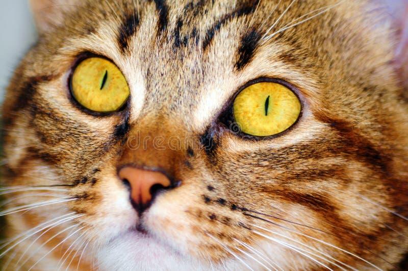 De close-up van het kattengezicht stock foto's