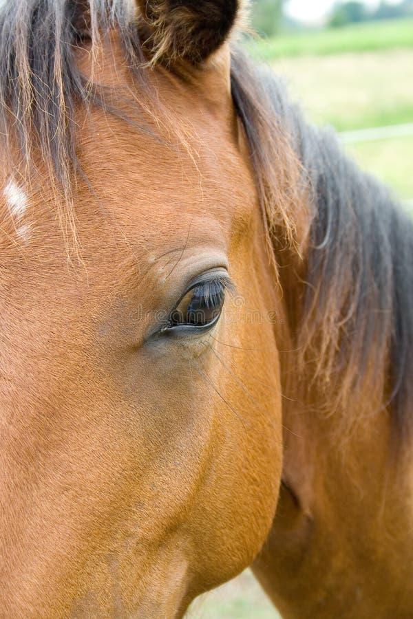 De Close-up van het paard stock afbeeldingen