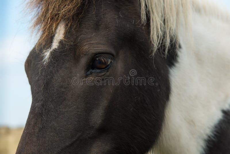De close-up van het paardoog stock afbeeldingen