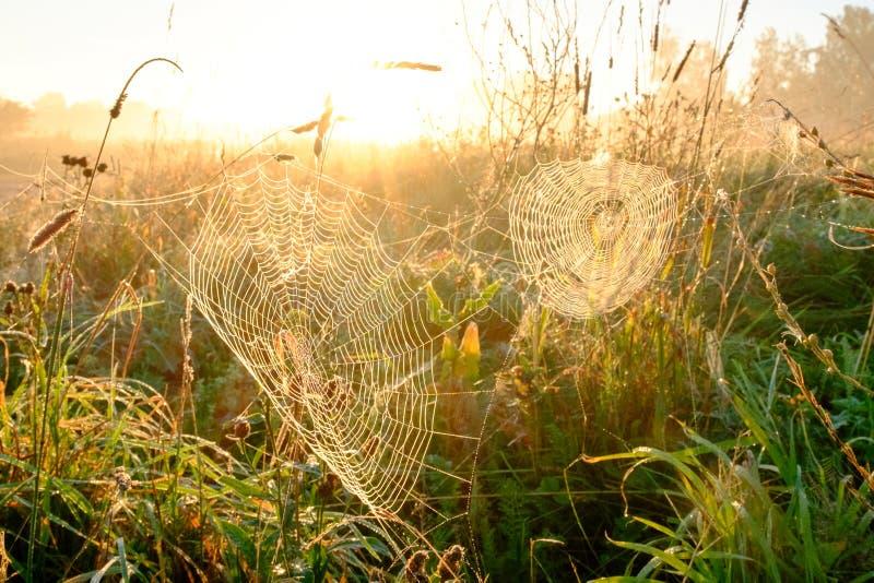 De close-up van het spin` s Web met dalingen van dauw bij dageraad Het natte gras v??r zon heft op Spinneweb met druppeltjes van  stock fotografie