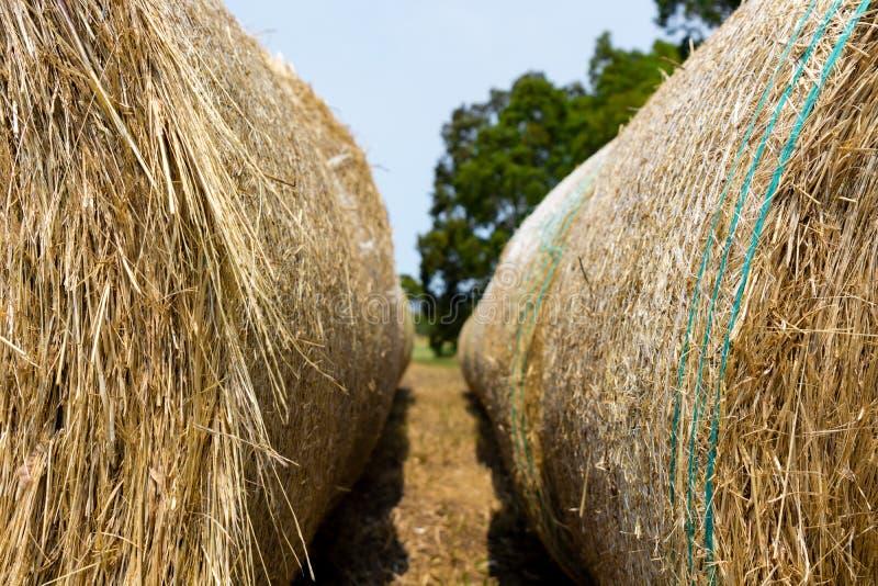 De close-up van hooibalen, met bomen op de achtergrond stock afbeeldingen