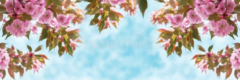 De close-up van de de kersenbloesem van de Sakurabloem over de panoramische hemel De kaartmalplaatje van de groet Ondiepe diepte  royalty-vrije stock foto