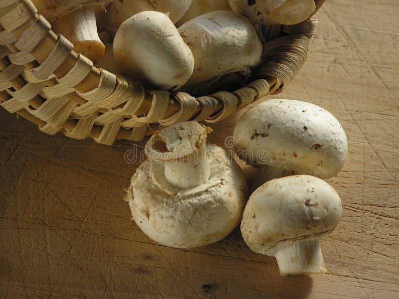 De close-up van paddestoelen stock afbeeldingen
