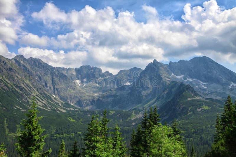 De close-up van pijnboombomen en overweldigende rotsachtige bergketen stock foto's