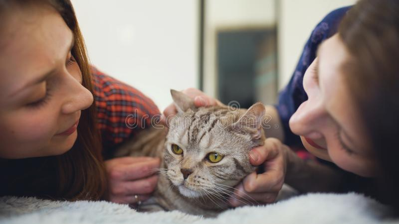 De close-up van twee gelukkige vrouwenvrienden die in de vette boze kat van de bedomhelzing liggen en heeft pret op bed stock foto