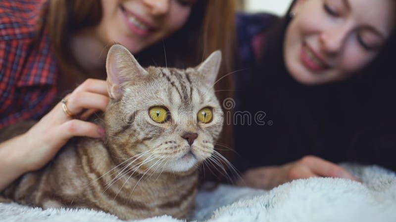 De close-up van twee gelukkige vrouwenvrienden die in de vette boze kat van de bedomhelzing liggen en heeft pret op bed royalty-vrije stock foto's