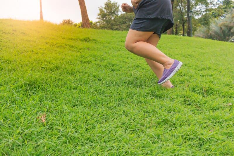 De close-upbenen stoten in het park op het groene gras aan, stock foto