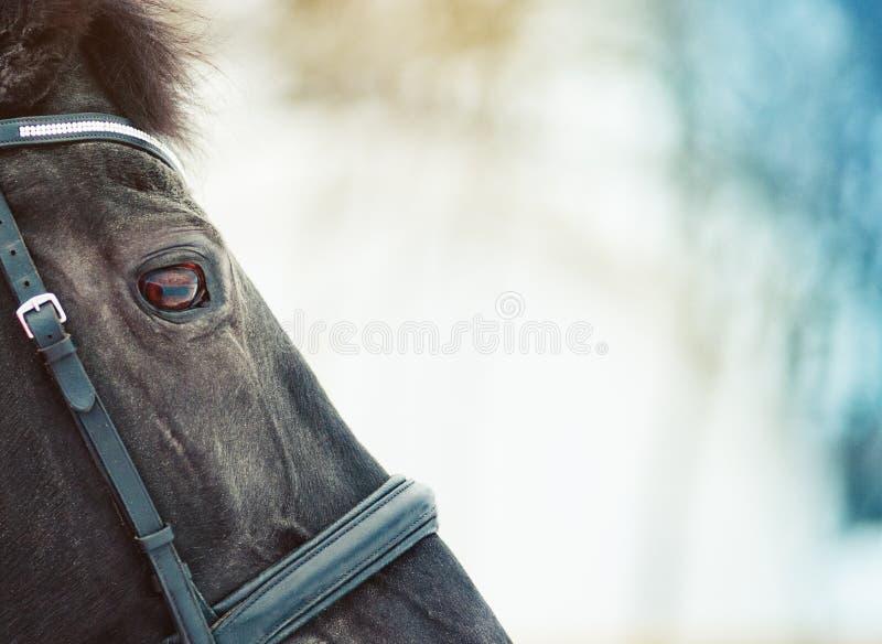 De close-updetails van het paardhoofd stock foto's