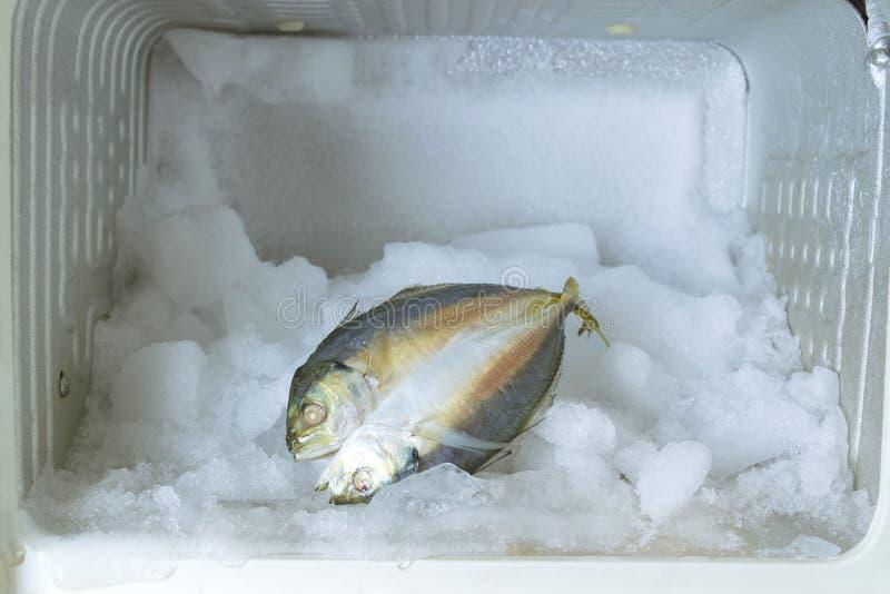 De close-updiepvriezer verloor het ijs en met sommige vissen in kant royalty-vrije stock foto's