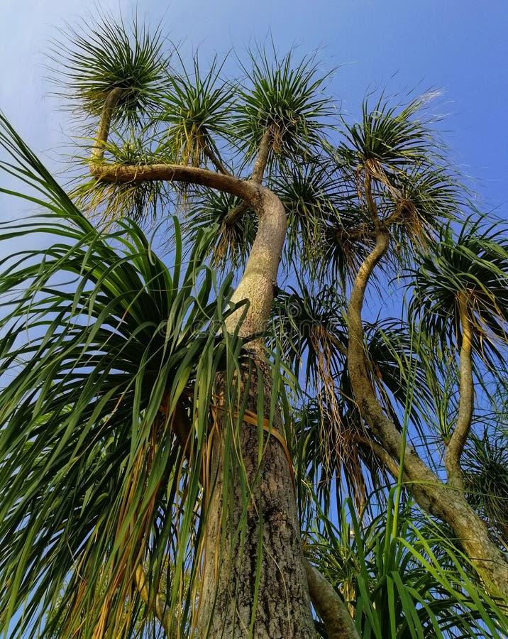 De close-upmening van een boom bij het botanische park stock foto's